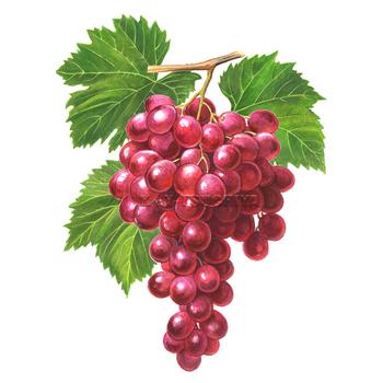 メルシャン葡萄1.jpg