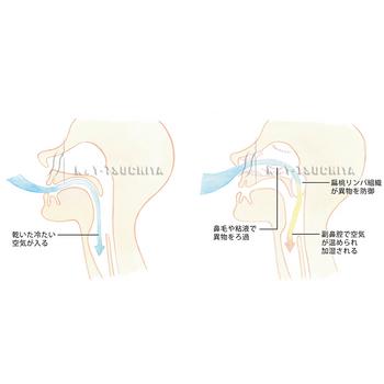 鼻呼吸本番修正N2.jpg