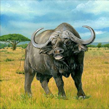 アフリカ水牛.jpg
