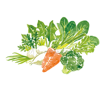 野菜本番.jpg