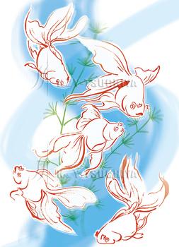 金魚水草.jpg
